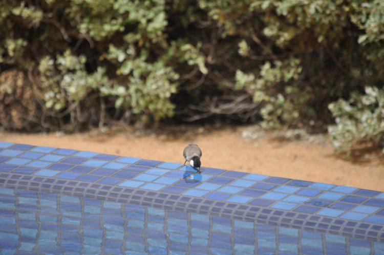 Al Maha Bird Pool