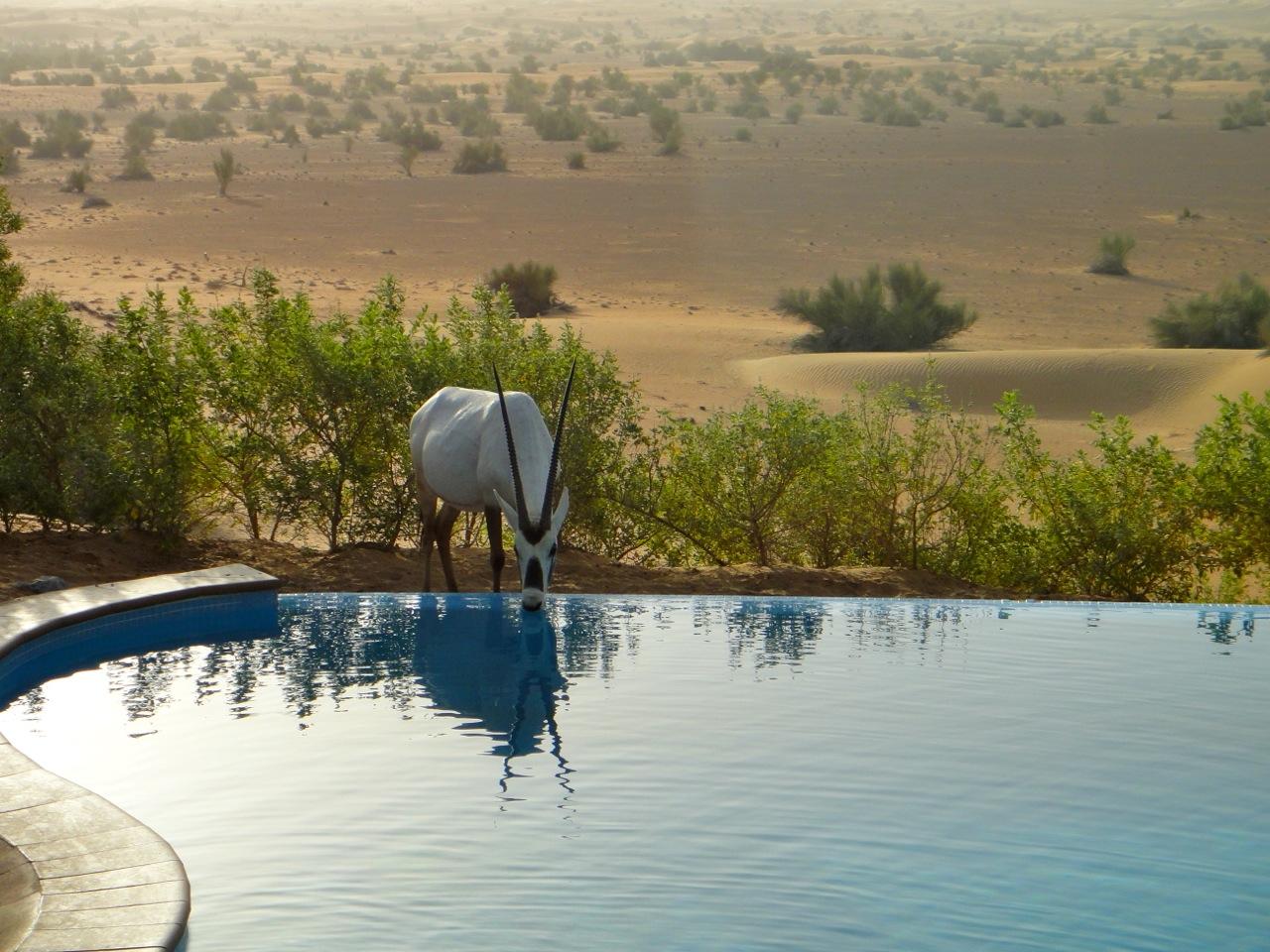 Al Maha Oryx Pool