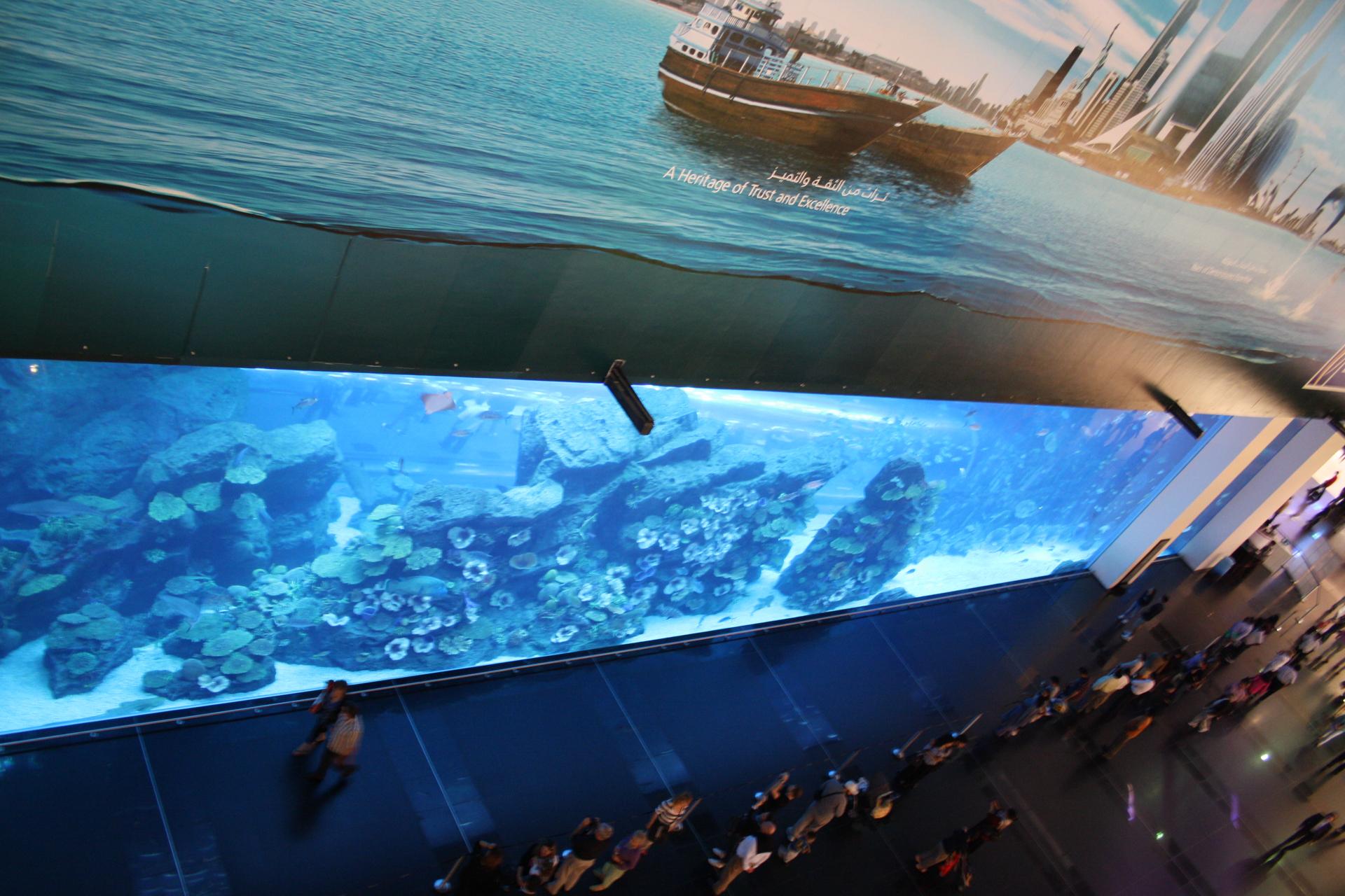 Dubai Mall Indoor Aquarium