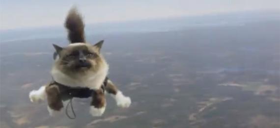 Folksam Versicherung wirbt mit fallschirmspringenden Katzen