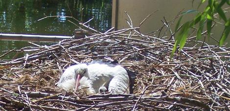 Man muss dem Adressenten kein Ei ins Nest legen
